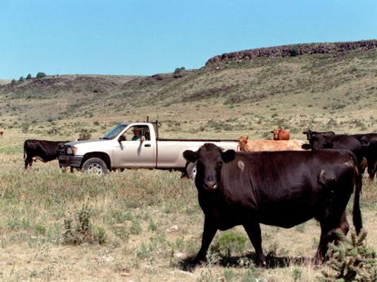 Cattle graze on a New Mexico ranch in this file photo.