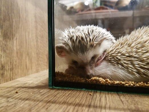 Nine Cutest Animal Cafes Around The World
