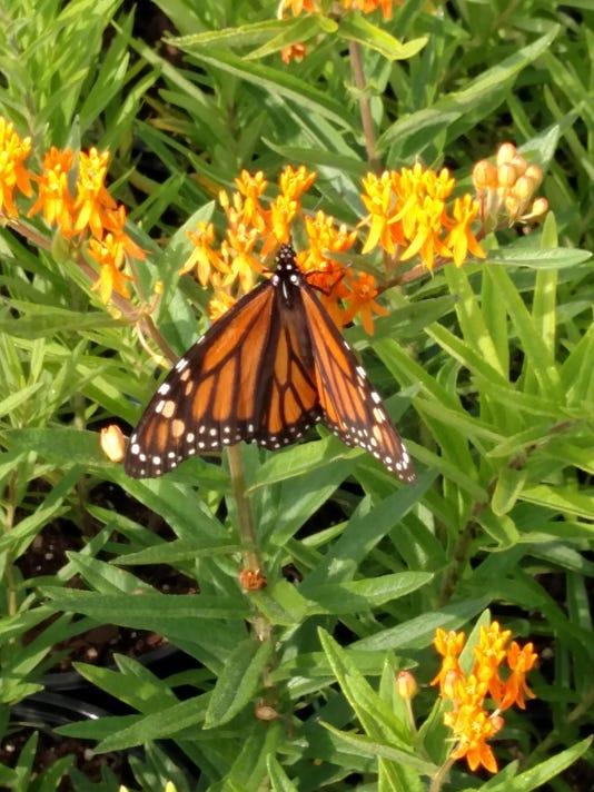 BMN 121015 Monarch Waystation