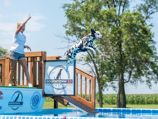 Kaeleb leaps for a toy tossed by Donna Colt of Haslett in July during a competition in Rock Falls, Ill.