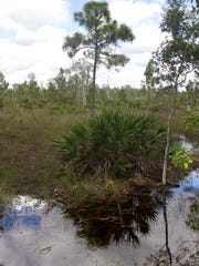 Part of a 1,400+ acre tract of land soon to be auctioned off in Northern Cape Coral near Burnt Store Road.