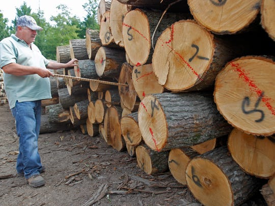 A timber purchaser explains lumber value in Florence