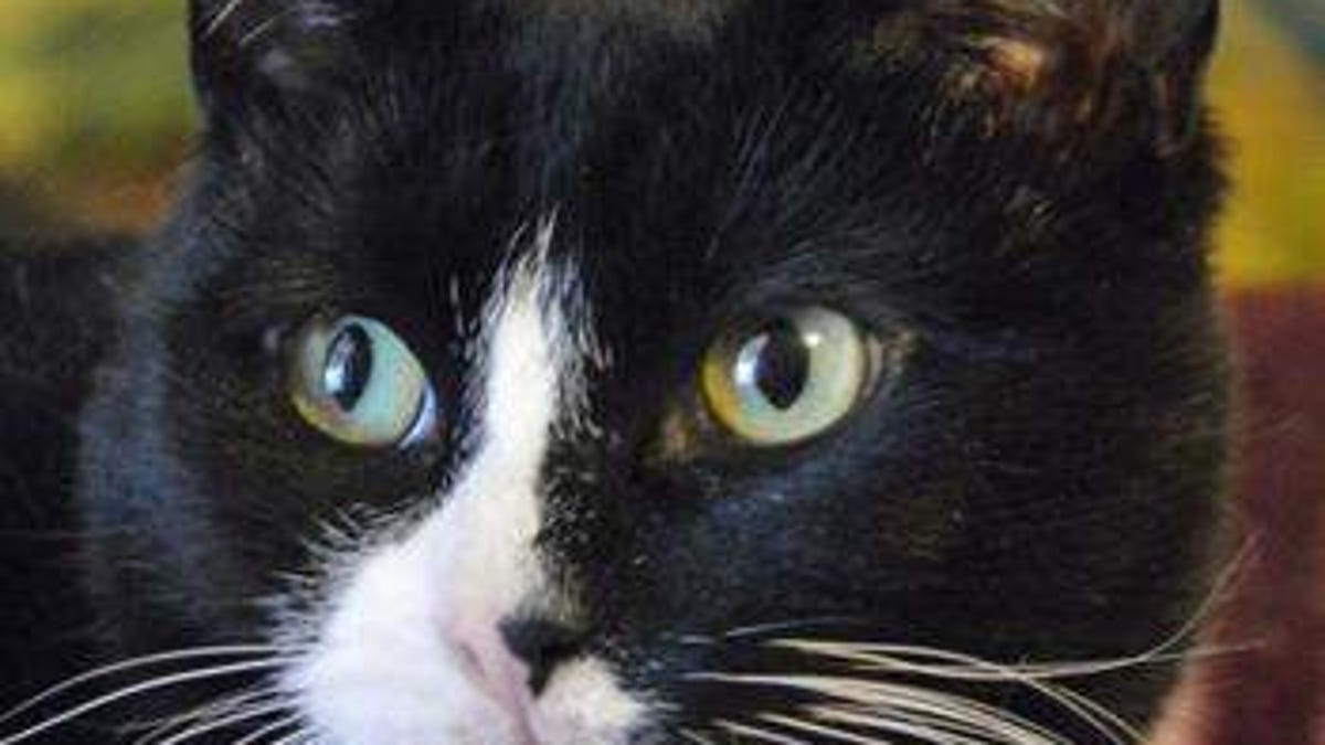 2 Pet Cats In Ny Test Positive For Coronavirus