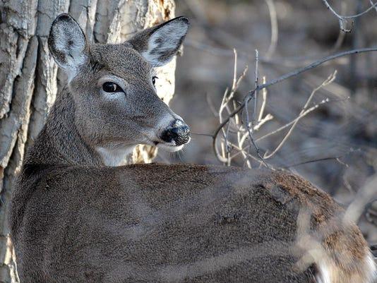 deer_hunting