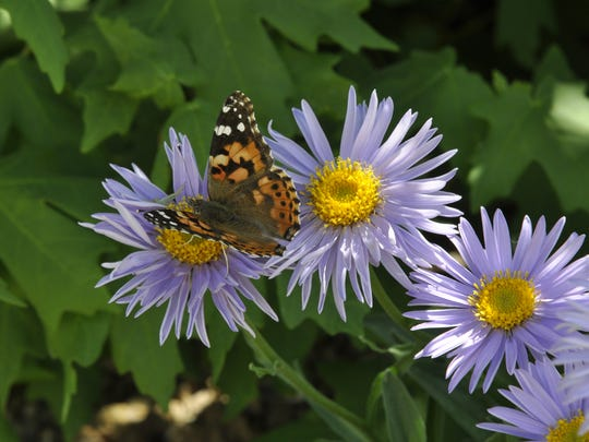 A butterfly on a purple flower. A butterfly house for