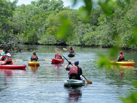 File: Kayakers head off down the creek. Rookery Bay National Estuarine Research Reserve.