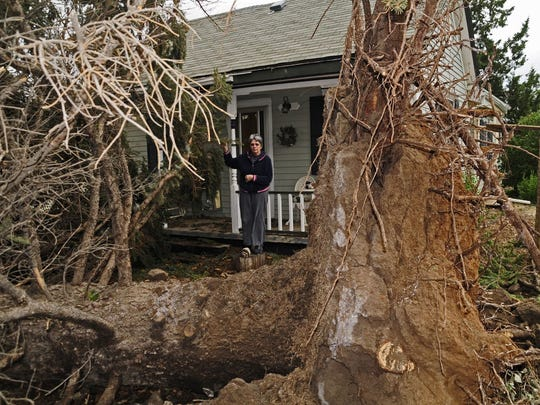 An uprooted tree sits in a Windsor yard after the 2008