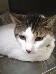 Stormy was abandoned in a crate by the Humane Society