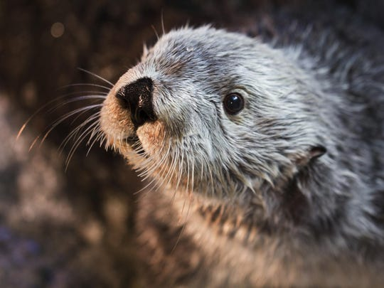 Charlie helped sea otters by taking part in a study on how the animals perceive sound.