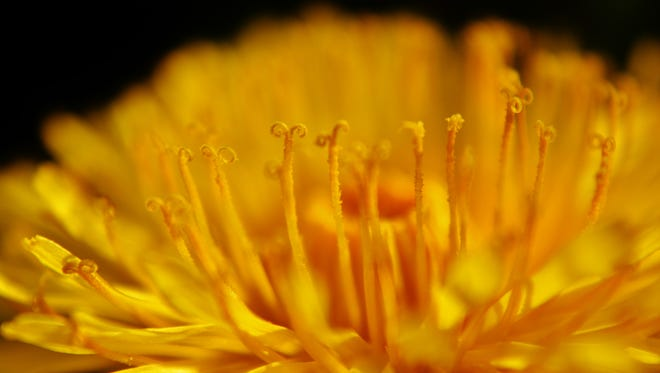 Abby Harvey's photo of a dandelion is on display at the Vice President's residence.