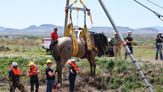 Emergency response personnel practiced hoisting a horse out of swift-moving water during a training hosted by New Mexico State University's College of Agricultural, Consumer and Environmental Sciences in Las Cruces and Socorro. The training used a 600-pound horse mannequin to give trainees a realistic experience .