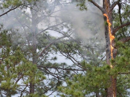 636270951745629951-Tree-fire.jpg
