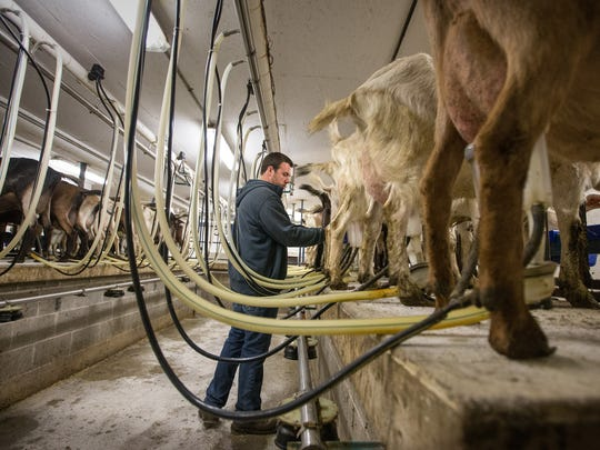 Seth Loudenbeck milks goats at the family farm. Milking is done daily at 4 a.m. and 4 p.m.
