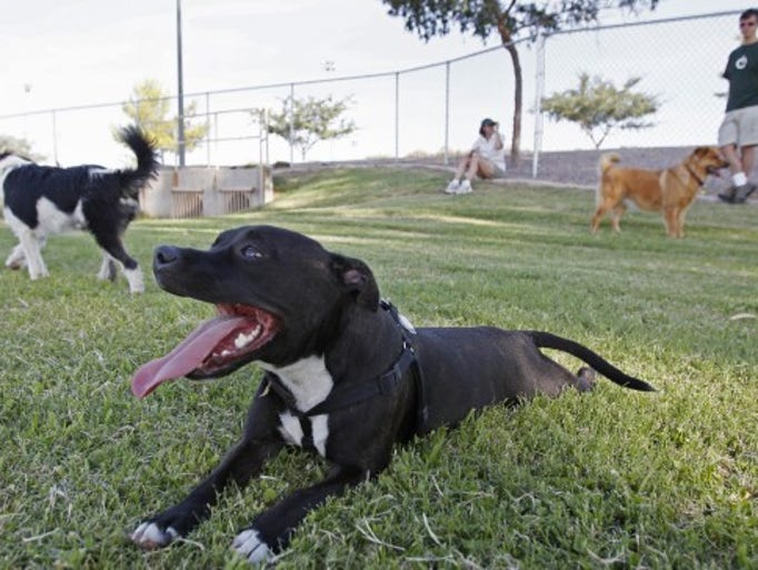 City Of Gilbert Dog Parks