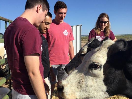 cows-students-1.jpg