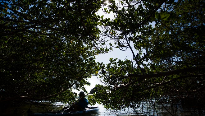 The mangroves open up into small coves along the Great Calusa Blueway Paddling Trail in Bonita Springs on Wednesday, April 18, 2018.