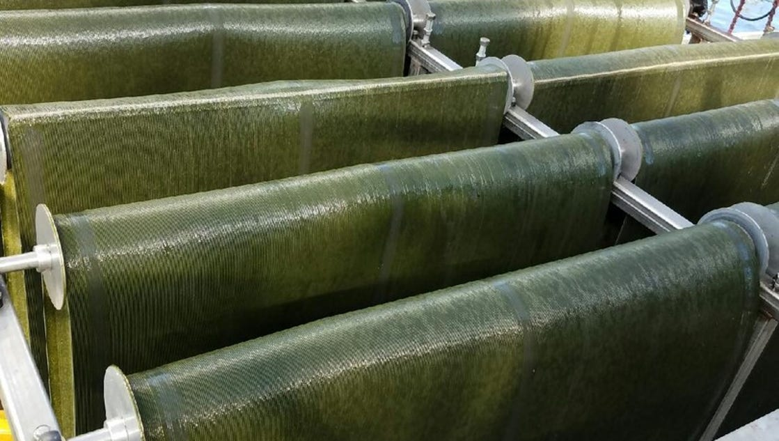 Could algae solve Iowa towns' clean water woes? 2 ISU scientists say, 'Yes'