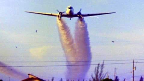 It was sometimes difficult to convince hysterical newcomers that a plane, trailing a billowing cloud of DDT, was not on fire and crashing in the immediate vicinity.