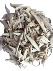 White sage is named for the large pale heavily scented leaves valued by tribes within its range.
