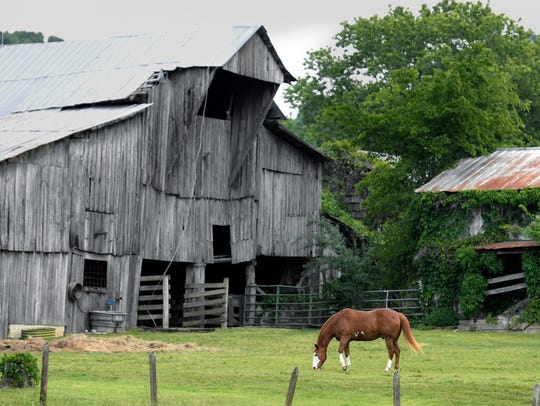 A horse gazes on a farm on Old Hillsboro Road in Leiper's