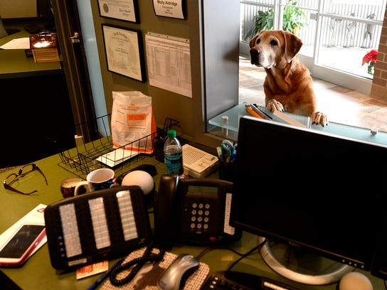 These business owners and their pooches are never apart, even at work