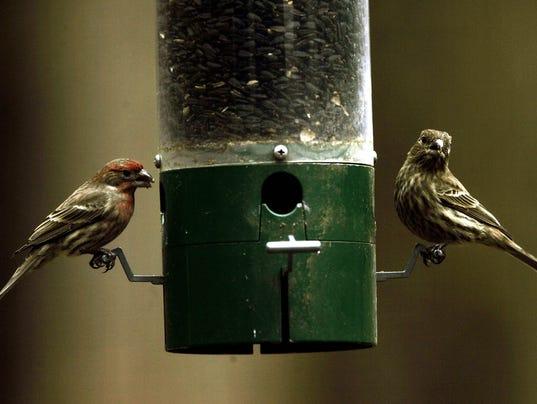 636098915675222578-HOM-BIRDS-021907-2.jpg