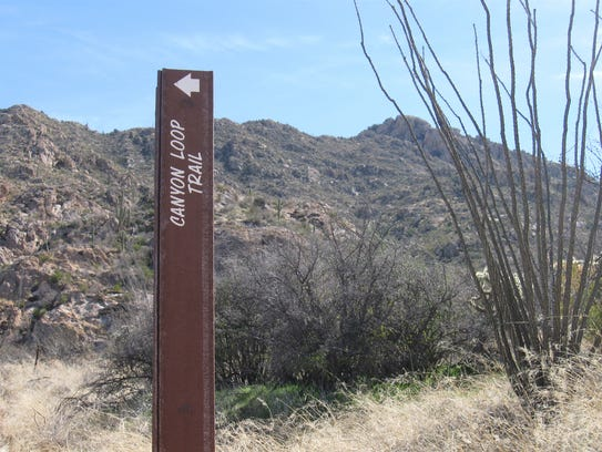 Hiking is a popular activity in Catalina State Park