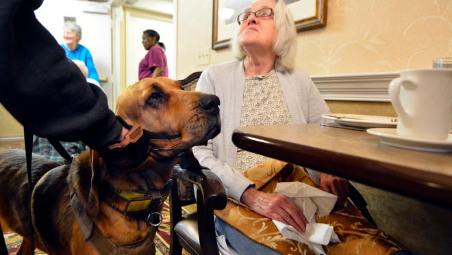 """K-9 Briggs, a bloodhound with Summit Search and Rescue, visits with Country Meadows of York resident Wilda Laughman, 87, after """"finding"""" her during a training session, Thursday, Jan. 12, 2017. John A. Pavoncello photo"""