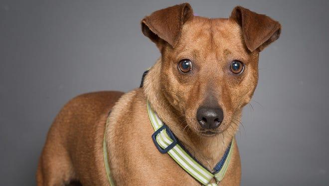 Meet Barker, chosen Williamson County Animal Center's Pet of the Week.