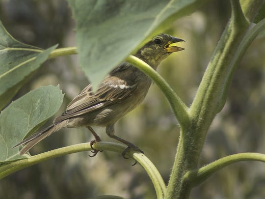 CNTwildbirdsunlimited-4