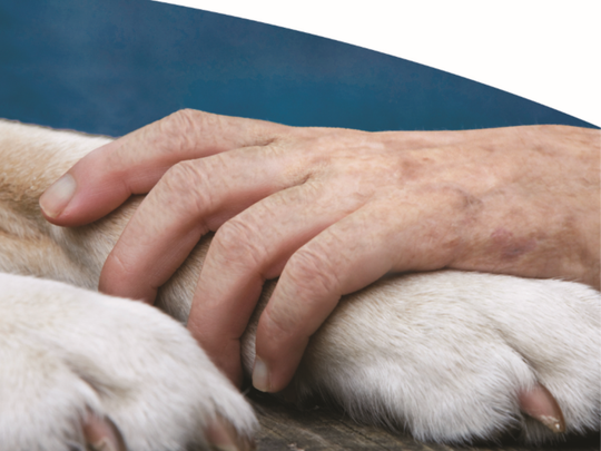 Pet Peace of Mind program will help Hospice patients
