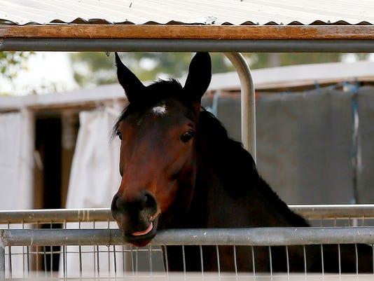 635897414374918760-Racehorses-Outbreak-AZMY1.jpg