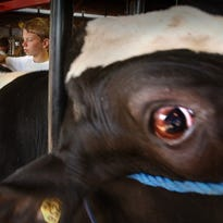 Cattle, humans both help taint wells in Wisconsin's Kewaunee County