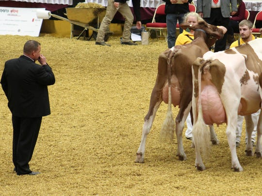 World Dairy Expo attracted 2,434 entries in the cattle