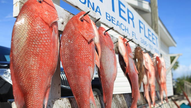 Red snapper and triggerfish hang on the rack at the Critter Fleet in Ponce Inlet, Fla.
