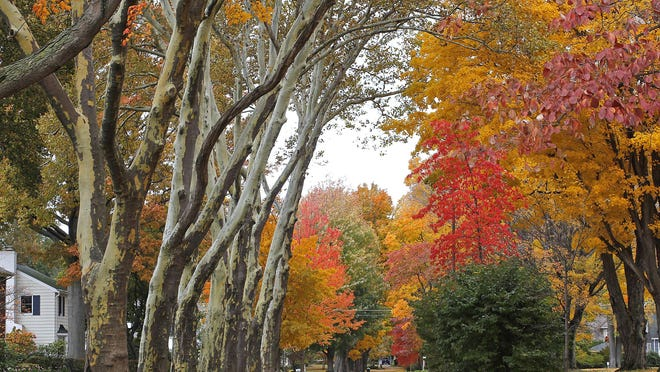 As summer draws to a close, fall colors will soon begin to pop.