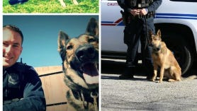 Rocky, Valor, and Saber will be receiving vests.