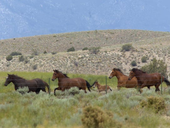 From 2005: Wild horses are shown near Gardnerville,