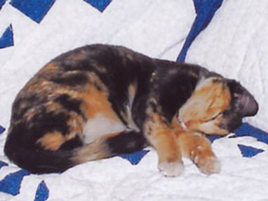 LOST: Calico cat from Dallastown, PA