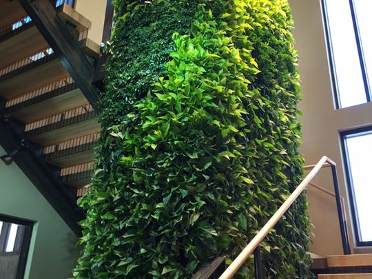 The Green Wall in the Pavilion at Laurel Village, the first LEED Platinum-certified building on the CSU campus.
