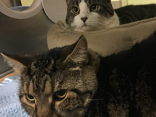 Lucky and Scooter