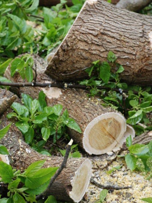 tree waste 488033171.jpg