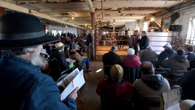 Hundreds of potential bidders crammed into Barn 6 Tuesday morning for the Mansfield Correctional Institution farm livestock auction.
