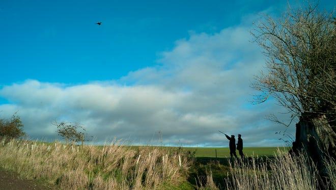 Men shooting grouse, Berwickshire, Scotland