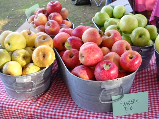 Apples are showing up in droves (and buckets) at the Black Mountain Tailgate Market.