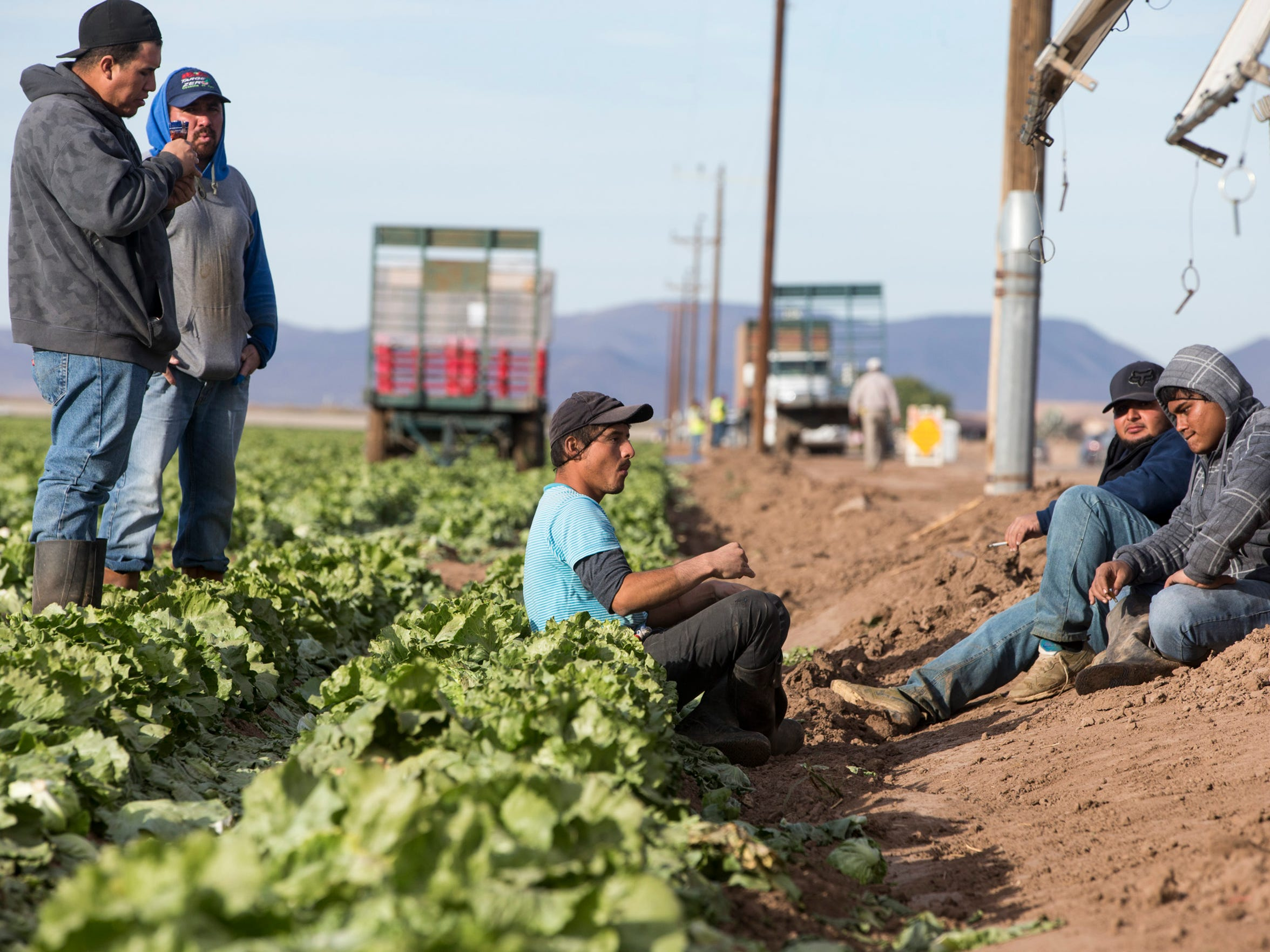 "Migrant workers harvest iceberg lettuce at JV Farms in Yuma, Ariz. Wherever you live in North America, chances are the lettuce you eat in the winter comes from the Yuma area. The Yuma Fresy Vegetable Association says that local farmers ""produce enough iceburg lettuce each year for every person in the United States, Canada and Mexico to have their very own head of lettuce."""