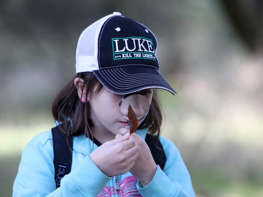 Turtle Bay School fifth-grader Kyler Oneal, 10, looks at the detail of a leaf at Whiskeytown Environmental School.