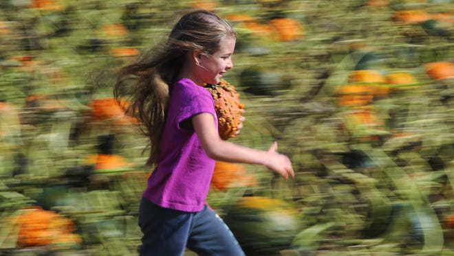 Alexia Steele, 7, Franklin runs through the  pumpkin patch with a pumpkin she found at a pick your own pumpkin patch