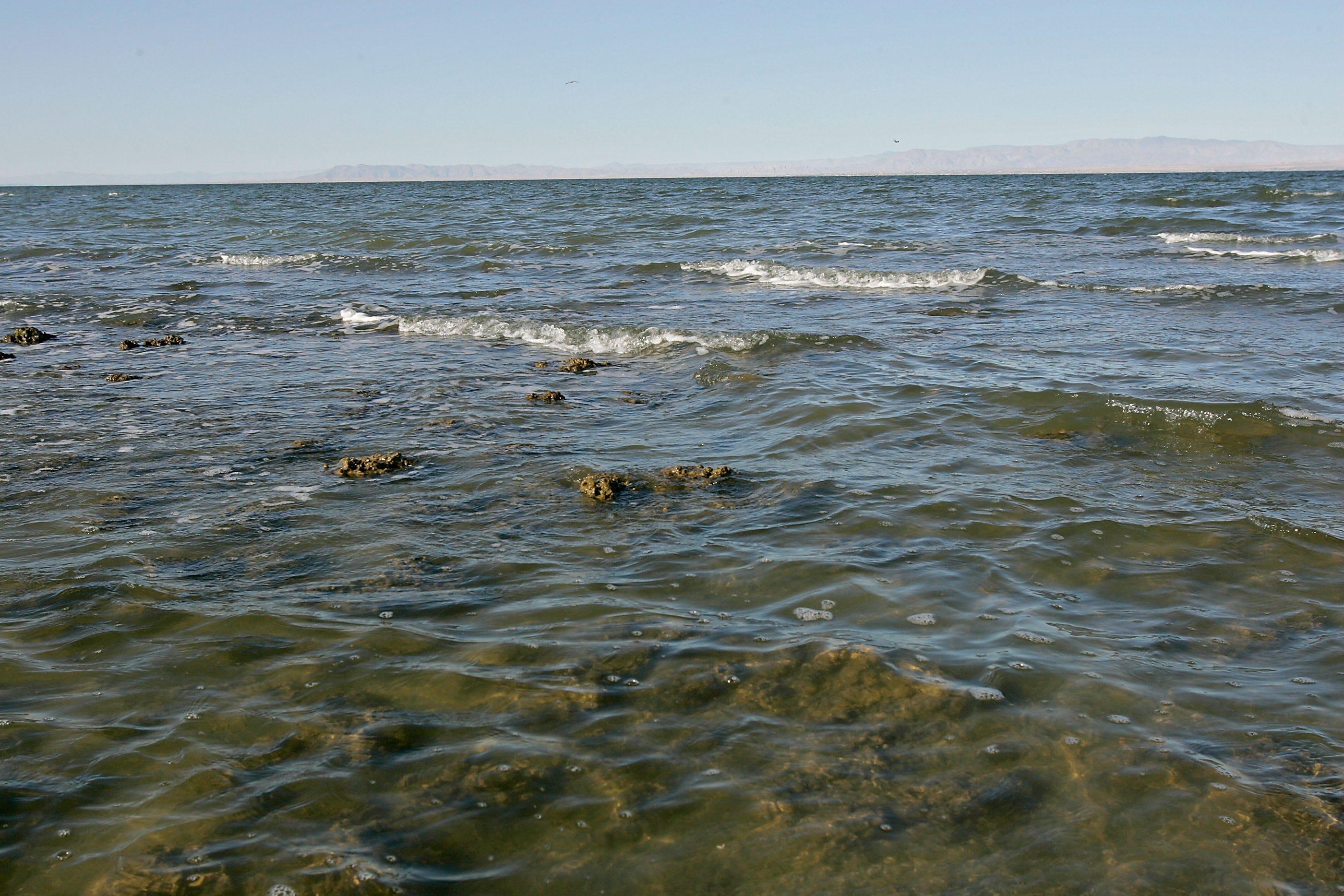 Salton Sea Archives - Reygun