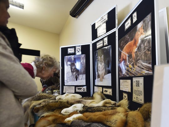 Class participants learn about wolves, coyotes and red foxes, from left, from one of the displays in the class.